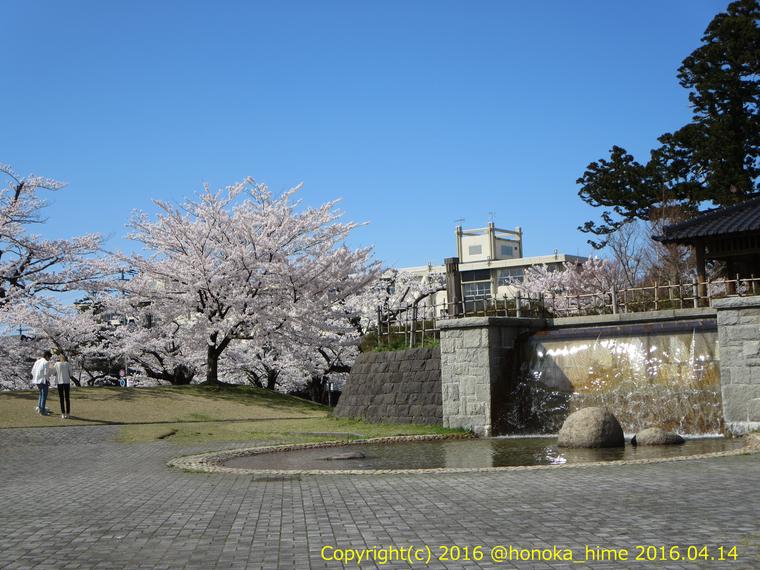 山形県 鶴岡公園 桜まつり2016.04.14(小滝と鶴工)