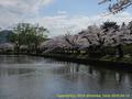山形県 鶴岡公園 桜まつり2016.04.14(噴水側その2)