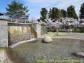 山形県 鶴岡公園 桜まつり2016.04.14(小滝と桜)