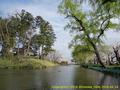 山形県 鶴岡公園 桜まつり2016.04.14(鴨池の桜並木)