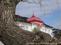 山形県 鶴岡公園 桜まつり2016.04.14(大宝館)