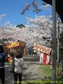 山形県 鶴岡公園 桜まつり2016.04.14(露店通り)