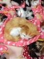 AKB48メンバー入りを夢見る眠り猫