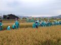 2016 小学生との稲刈り体験学習
