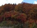 月山の紅葉2