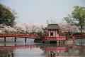 茂原公園桜祭り