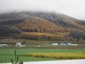 黄葉と初雪