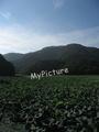 上池と高館山2010