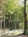 鶴岡湯田川温泉梅林公園2011その7