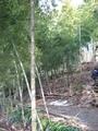 鶴岡湯田川温泉梅林公園2011その8