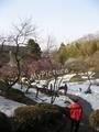 鶴岡湯田川温泉梅林公園2011その10