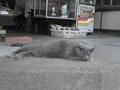 香川琴平宮にて。渋い猫