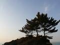 道の駅「あつみ」しゃりん 日本海の旅 海に映える松
