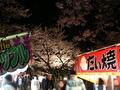 鶴岡公園 夜桜と出店