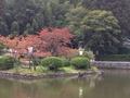 紅葉 桜の木